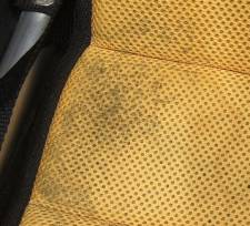 Mold or Fungus: Something is Growing in the Seat